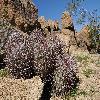 EchinocactusPolycephalus5.jpg 1200 x 797 px 583.71 kB