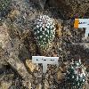 EchinocactusWippermannii.jpg 1024 x 768 px 232.97 kB