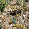 Echinocactus.jpg 1110 x 833 px 326.48 kB