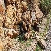 Echinocereus3.jpg 1201 x 804 px 443.56 kB