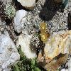 EchinocereusChloranthus2.jpg 1024 x 685 px 156.24 kB