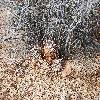 EchinocereusEngelmannii3.jpg 1201 x 804 px 431.27 kB