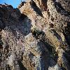 EchinocereusEngelmannii.jpg 1201 x 804 px 294.52 kB