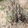 EchinocereusFendleri4.jpg 1201 x 804 px 383.7 kB