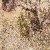 Echinocereus.jpg 1201 x 804 px 416.93 kB