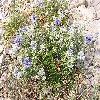 Echinops.jpg 1024 x 768 px 331.86 kB