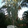 Echinopsis4.jpg 1106 x 830 px 282.3 kB