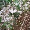 Echinopsis.jpg 1095 x 821 px 311.52 kB