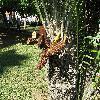 Encephalartos3.jpg 1110 x 833 px 334.09 kB