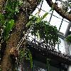 EpiphyllumOxypetalum3.jpg 1024 x 768 px 241.4 kB