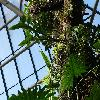 EpiphyllumOxypetalum5.jpg 1024 x 768 px 223.38 kB