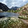 Eriophorum.jpg 1024 x 682 px 293.03 kB