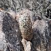 EscobariaAlversonii3.jpg 1201 x 804 px 258.71 kB