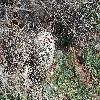 EscobariaAlversonii4.jpg 1201 x 804 px 386.72 kB