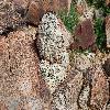 EscobariaAlversonii5.jpg 1201 x 804 px 345.51 kB