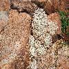 EscobariaAlversonii6.jpg 1201 x 804 px 349.61 kB