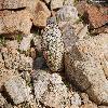 EscobariaAlversonii7.jpg 1201 x 804 px 309.27 kB