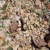 EscobariaAlversonii8.jpg 1201 x 804 px 368.97 kB