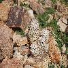 EscobariaAlversonii9.jpg 1201 x 804 px 294.44 kB