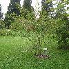 EuonymusEuropaeus2.jpg 576 x 768 px 157.33 kB