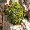 Euphorbia3.jpg 1096 x 823 px 279.97 kB