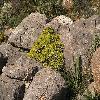 Euphorbia4.jpg 1095 x 821 px 297.84 kB