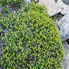 EuphorbiaAcanthothamnos.jpg 774 x 518 px 117.88 kB
