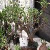 EuphorbiaPiscatoria.jpg 1024 x 623 px 192.61 kB
