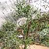 EuphorbiaTirucalli5.jpg 615 x 820 px 195.82 kB
