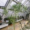 EuphorbiaTirucalli6.jpg 615 x 820 px 160.73 kB