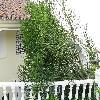 EuphorbiaTirucalli7.jpg 1086 x 815 px 255.7 kB