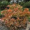 EuphorbiaTirucalli8.jpg 797 x 1200 px 577.68 kB