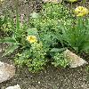 Euphorbia.jpg 638 x 850 px 184.25 kB