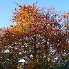 FagusSylvatica10.jpg 636 x 848 px 239.33 kB