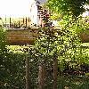 FagusSylvaticaAtropunicea.jpg 576 x 768 px 158.61 kB