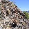 FerocactusAcanthodes3.jpg 1000 x 750 px 311.41 kB
