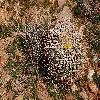 FerocactusCylindraceus12.jpg 1201 x 804 px 429.88 kB