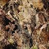FerocactusCylindraceus2.jpg 1201 x 804 px 363.71 kB