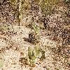FerocactusWislizeni6.jpg 1201 x 804 px 440.73 kB