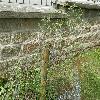 FraxinusExcelsiorErosa.jpg 1127 x 845 px 288.33 kB