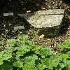 GeumCoccineumSplendens.jpg 634 x 845 px 164.94 kB