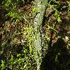 GleditsiaTriacanthos14.jpg 1219 x 914 px 321.04 kB