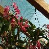 GuariantheGuatemalensis.jpg 1339 x 893 px 511.75 kB