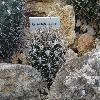 GymnocalyciumAchirasense4.jpg 1024 x 768 px 226.91 kB