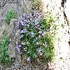 HaberleaFerdinandiiCoburgii2.jpg 1204 x 806 px 302.08 kB