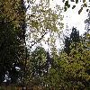 HalesiaCarolina5.jpg 1024 x 768 px 294.29 kB