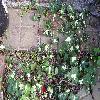 HederaHelix3.jpg 820 x 615 px 172.96 kB