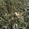 Hibiscus10.jpg 1127 x 845 px 226.77 kB