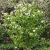 Hibiscus4.jpg 615 x 820 px 224.4 kB