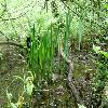 Iris7.jpg 1127 x 845 px 219.91 kB